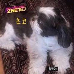박봄애완견13.jpg