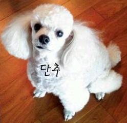 박봄애완견14.jpg